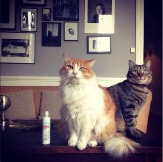 2 chats assis sur une table